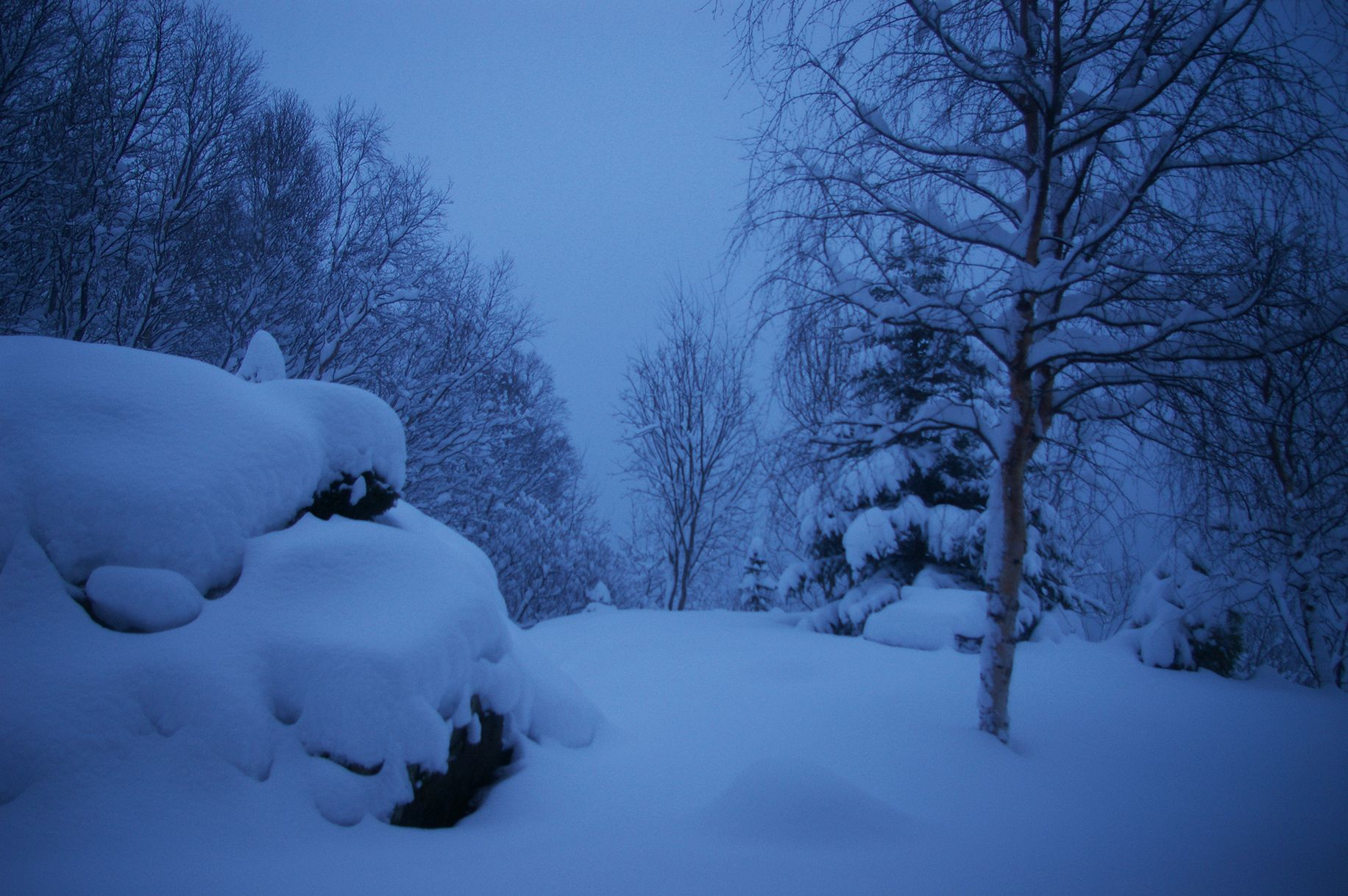 Blue noon. Photo taken at noon by the author in his garden in Tromsø, December 2006.