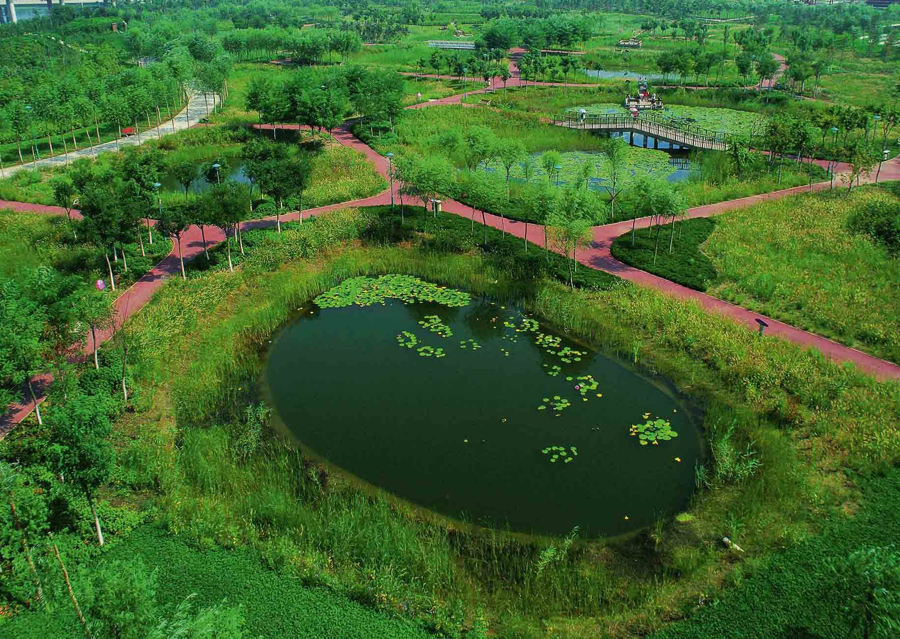 Tianjin Qiaoyuan Wetland Park, Tianjin City, 2008. Turenscape planned the regeneration of a deserted shooting range and former garbage dump into a low maintenance urban park.